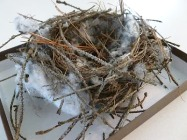 Love the BIRD'S NESTS! http://unschoolrules.com/wp-content/uploads/2012/03/found-bird-nest.jpg