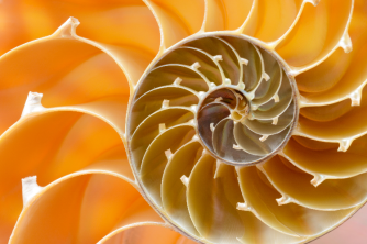 Shell - Radial Balance: https://www2.shutterstock.com/blog/wp-content/uploads/sites/5/2015/10/Stock-Photo-Nautilus-750x500.png