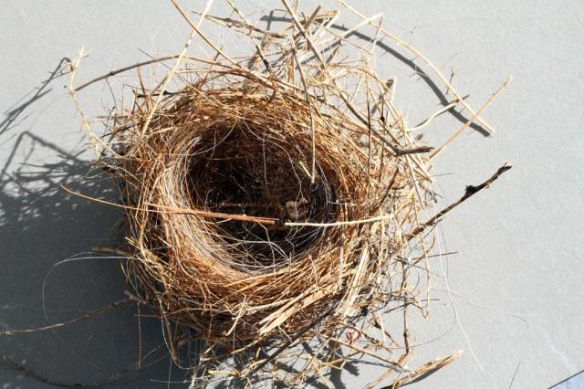 birds-nest-3-1024x682