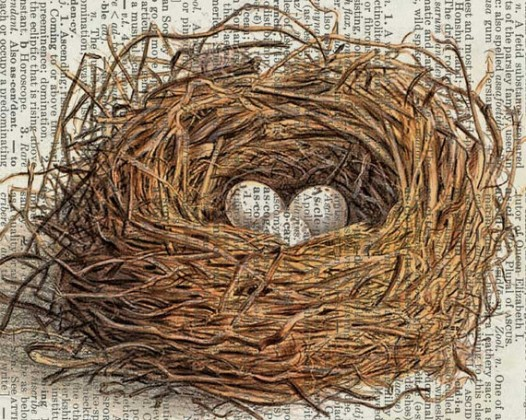 birds-nest-artwork-526x420