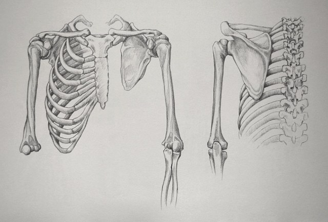 shoulder-and-arm-16-3-by-drawing-academy