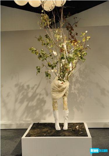 peregrine-tree